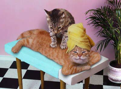 catmassage.jpg