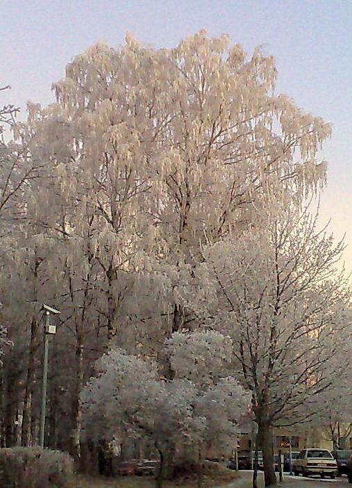 frosttrad.jpg